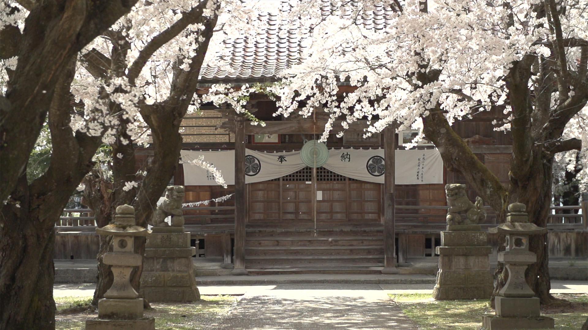 会津地方の桜1_0023_スクリーンショット 2015-01-30 9.54.59